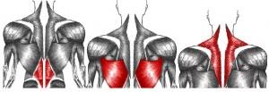 תרגיל למניעת כאבי גב תחתון
